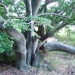 Дърво! Изглежда строго и със сериозно изражение. Дано не го боли