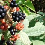 Истинските горски плодове съществуват.