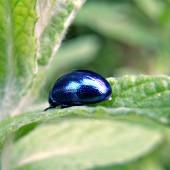 Сини бръмбари, жълти охлюви, червени паяци големи, колкото шепа, няма проблем, има от всичко.