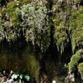 moss-wet-area