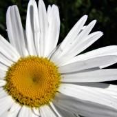 white-flower-macro