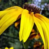 Хората в спокойните части на България отглеждат красивите си цветя дори извън дворовете си, без да се тревожат, че някой може да ги унищожи или обере.