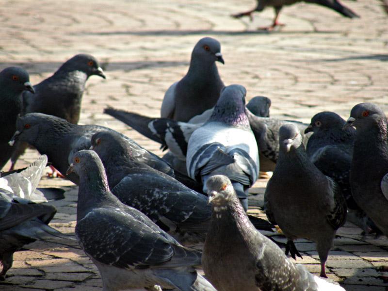 Има хора, които никога не са хранили гълъби в живота си. Има хора, които са го правили веднъж или два пъти. Има такива, които нямат против да хвърлят хапка някой път на градските птици. Има хора, които го правят редовно, а те имат много специфичен семеен бюджет. Не карат Мазерати. Не използват мобилни телефони и таблети. Вероятно са от онези, които следват съветите на мъдреците
